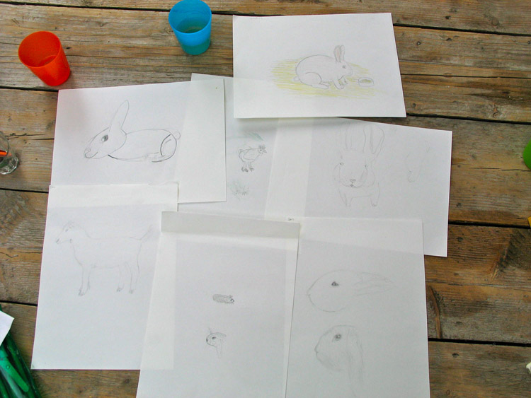 schetsen en tekeningen van konijnen